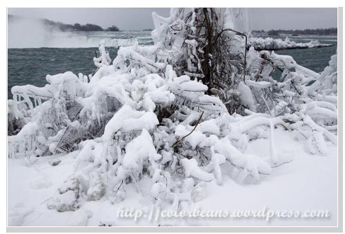 Niagara-Falls 河岸邊的樹枝上都是冰和雪