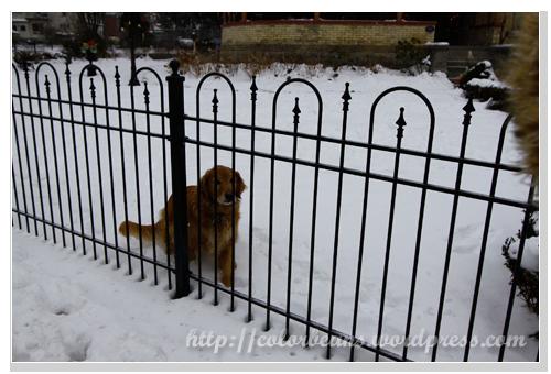 Niagara-Falls 可愛的民宿當然要有一之友善的狗狗! :D