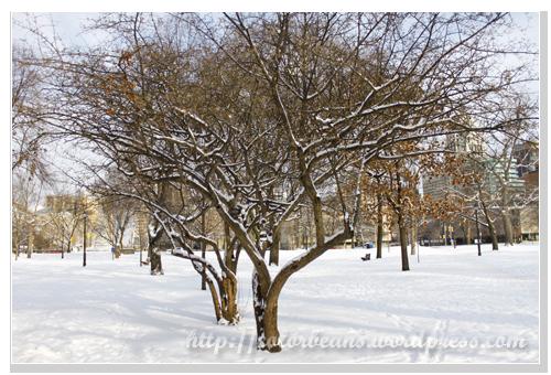 雪景真美!