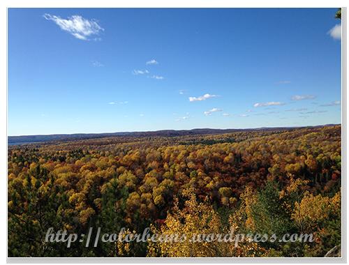 顏色很繽紛的楓樹林