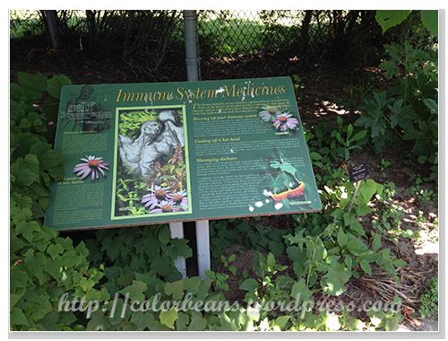 Medicinal Garden針對人體不同的系統來規劃
