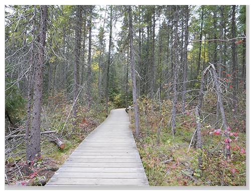 行動不便者也可以走得Spruce Bog Boardwalk