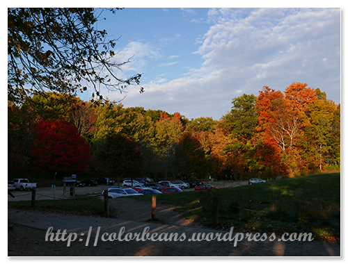 停車場的楓葉都很漂亮呀