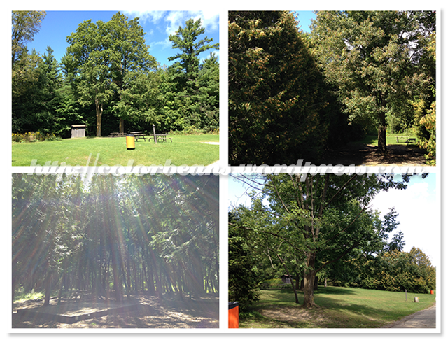 各種不同的camping site