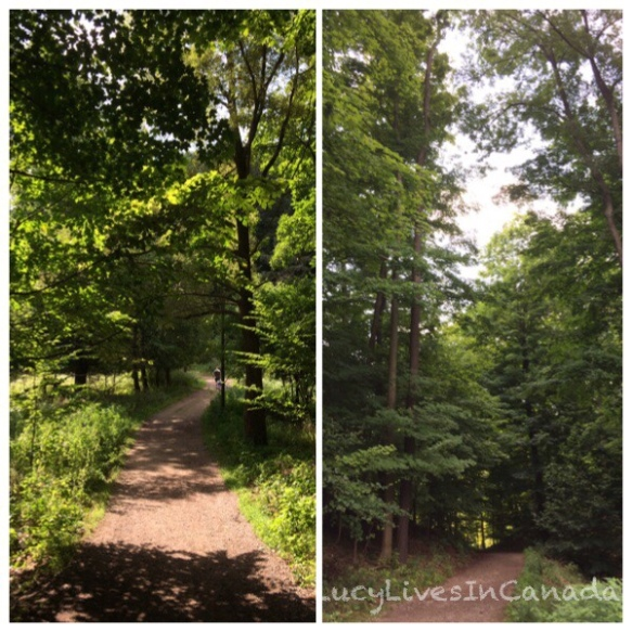 Hickory Valley Trail