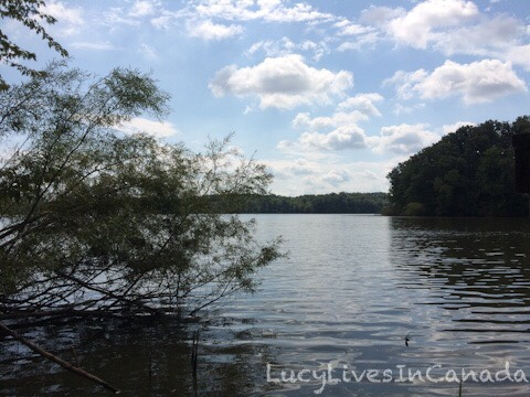 Cootes Paradise Marsh