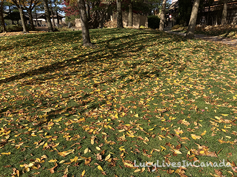 綠地配落葉也很漂亮